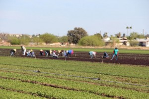 the organic sector in Argentina