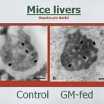 GMO_0213_Mice Livers 2