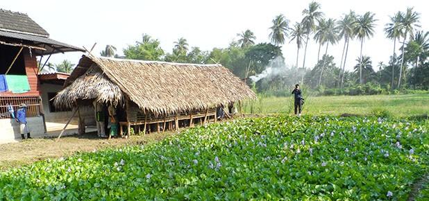 Innovation in Organic Farming