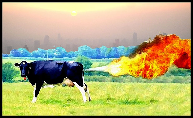Cow Methane Pollution