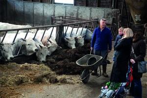 Methane Tom Saat in stables
