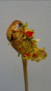 Grasshoppers  - cricket candy