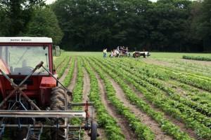 Dutch organic farm