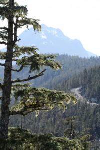 Rainforest logging road