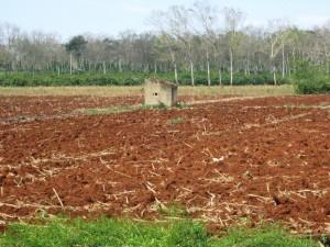 Dak Lak Soil